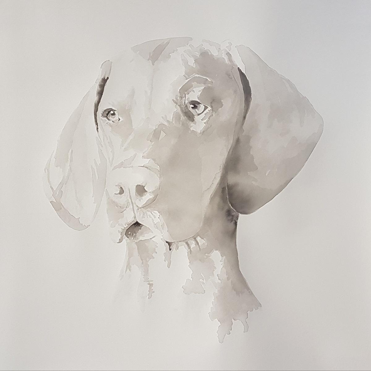 hondenportret van een vizsla in een zachte wassing