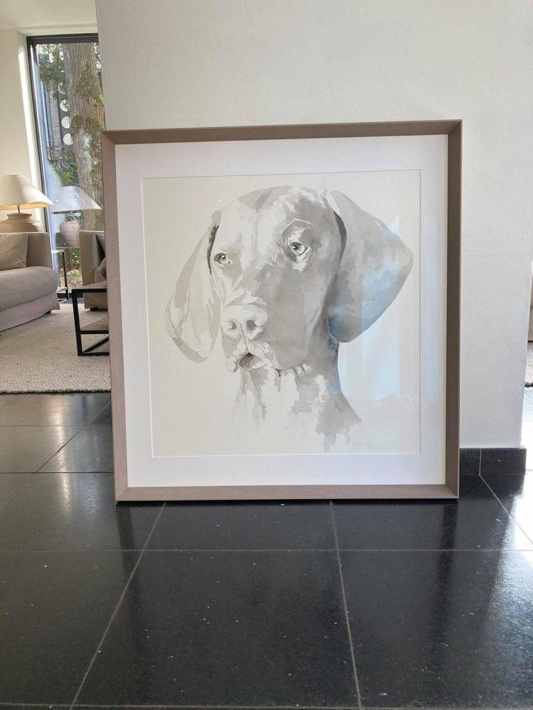 hondenportret vizsla klantfoto